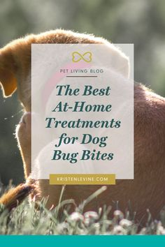 If dog has bug bites, he may be suffering and scratching. Pet Living blog dives into how you can treat his itchy bites at home. #dogcare #dogownertips #doghealth #pethealth #dogs #doglove #petcare Bug Bite Treatment, Home Treatment, Dog Health Tips, Pet Health, Health Questions, What To Use, Dog Safety, Healthy Pets, Dental Health