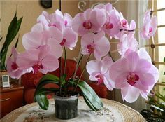 Archívy Domácnosť - Page 9 of 208 - To je nápad! Herb Garden, Garden Pots, Baobab Tree, Orchid Arrangements, Orchids Garden, Horticulture, Houseplants, Container Gardening, Indoor Plants