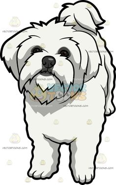 funny clip art animals pesquisa google maltese pinterest rh pinterest com maltese clipart black and white maltese puppy clipart