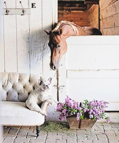 Picture perfect horse in barn with flowers and sofa.