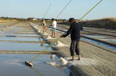 Après une visite de l'exposition 'Sel de mer, Sel de Ré' qui retrace l'histoire des marais salants rétais et illustre la technique de production du sel, un guide vous expliquera le fonctionnement du marais salant et vous accompagnera sur le site naturel...