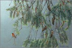 Purchase Robert Bateman - Douglas Fir and Rufous Hummingbird at Gallery One