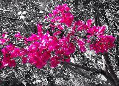 I heart pink.
