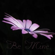 '~ Love is Vulnerable ~' by Donna Keevers Driver Vulnerability, Valentines, Love, Flowers, Plants, Photography, Valentine's Day Diy, Amor, Photograph