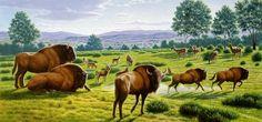 Bison antiquus - Căutare Google