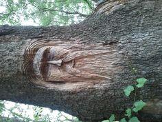 The Man in the Tree...in Hagley Estates, Pawleys Island
