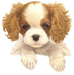 Honden - francien van westering