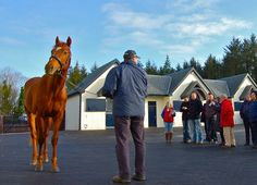 The lineup of 27 stud farms set to participate in the 2017 Irish Thoroughbred Marketing Stallion Trail has been released. The stallion trail will take place Jan. 27 and 28. ITM's Marketing Manager, Sarah Nash, …
