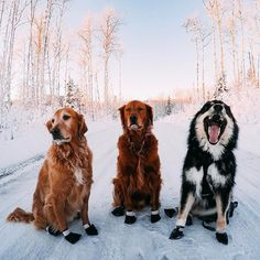 """Snow's ok, I suppose, but we're not as big a fan of the whole """"cold"""" thing as THIS guy..."""