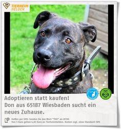 Don ist ein klasse Hund und wartet völlig zu unrecht viel zu lange im Tierheim Wiesbaden.  http://www.tierheimhelden.de/hund/tierheim-wiesbaden/presa_canario_mix/don/598-0/  Don sprüht vor Lebensfreude und Energie und sollte entsprechend ausgelastet werden. Er hat einen guten Grundgehorsam, testet jedoch auch mal, ob sein Halter sich durchsetzen kann. Mit den meisten Hunde