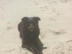 Tillie loving the beach!  Anne Barnhardt