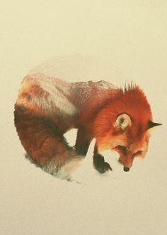 septagonstudios:  Andreas Lie SNOW FOX