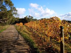 You can easily visit the Mornington Peninsula as a day tour from Melbourne, but read on, you might like to spend more time in this enchanting wine region. #morningtonpeninsula #rareozzies #auswine Wine Varietals, City Folk, Italian Wine, Seaside Towns, Day Tours, Beautiful Landscapes, Wineries, Scenery, Paisajes