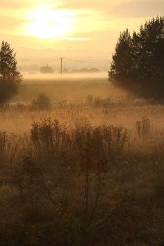 From the blog … When dreams change ... destinationherean... #sunrise #bathurst #gold #light #macquarieriver