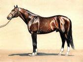 Thoroughbred, Equine Art - Citation