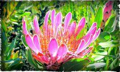 Compacta Where I live Eagle Nest, Hiking Trails, Eagles, Natural Beauty, Flora, Live, Nature, Plants, Compact