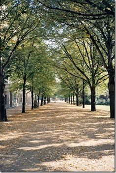 Allee of trees!