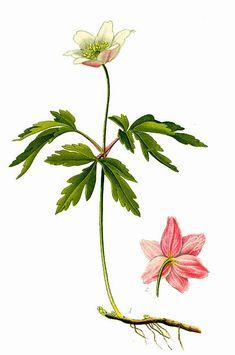 Ikebana, Bonsai, Things That Bounce, Illustrations, Feelings, Tattoos, Spring, Crochet, Flowers