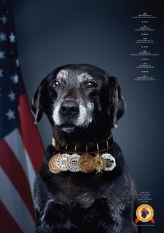 National Disaster Search Dog Foundation print ads | Communication Arts