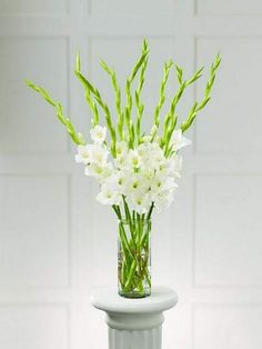 After I purchased my Gladiolus from the Farmer's Market I arranged them in a huge vase. Gladiolus Centerpiece, Gladiolus Arrangements, Tall Floral Arrangements, Table Arrangements, Tall Flowers, Purple Flowers, White Flowers, Beautiful Flowers, Alter Flowers