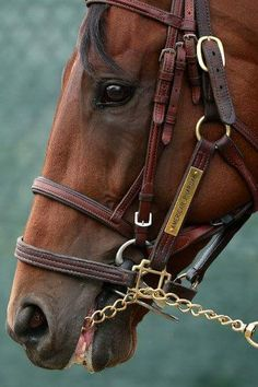 American Pharoah...Triple Crown Winner