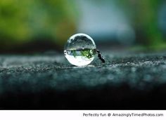 Ant pushing a water droplet | Amazingly Timed Photos