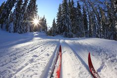 """""""Nordic"""" Ski Town, USA! Famous for thechampagne powder andincredible alpine skiing, but Steamboat is aworld-class nordic destination as well.Home to four nordic ski centers, all within30 minutesof downtown Steamboat."""