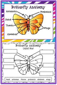 print out this free butterfly diagram to teach your students about the parts of a butterfly. Black Bedroom Furniture Sets. Home Design Ideas