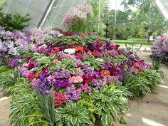 Colourful floral display in Conservatory, Ballarat Botanic Gardens