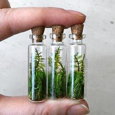 Mini glass vials with living plants (moss).