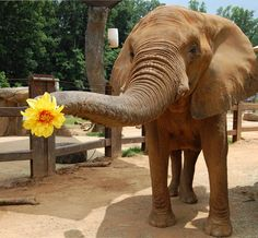 Here I brought you a flower to celebrate the first day of Spring! Enjoy the day!!  Photo by the Knoxville Zoo.