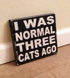 I was normal three cats ago.