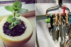 Ce punem în brazdă atunci când cultivăm roșii sau castraveți - Perfect Ask Panna Cotta, Home And Garden, Pudding, Mai, Ethnic Recipes, Desserts, Gardening, Food, Plant
