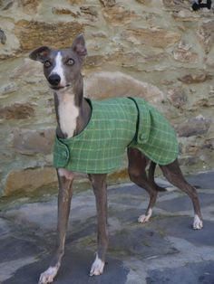 """LEATHER ITALIAN GREYHOUND// WHIPPET PUPPY FITS SMALL NECK 9/"""" o - 11/"""" 23CM 28CM"""
