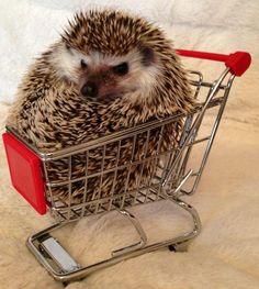 Let's go shoppin'