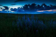 albastrele by intrud3r intrud3r on 500px