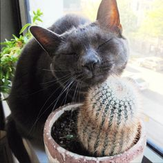 Because not all plants are cat-friendly, we decided to, for this post, focus on the ones that are totally safe for your favorite feline creatures.