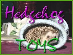 Toys for your pet hedgehog