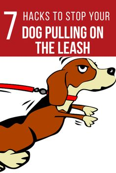 Enjoy Walking Your Dog: Stop Leash Pulling!     Tired of taking your 20 lb dog for a walk and feeling like your wrestling a team of sled dogs across Antarctica? Check out these 7 easy hacks to stop leash pulling and start enjoying your walk again. Dog Won't Come When Called? Download our FREE …