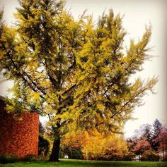 Dramatic color! Fall on campus, 2013.