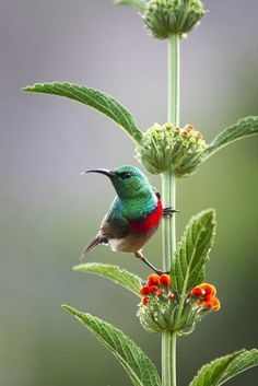 Sunbird. Had a malachite visit at my window yesterday. Stayed for around 3 minutes