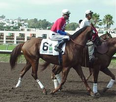 Ecton Park(1996)Forty Niner- Daring Danzig By Danzig. 4x4 To Nearctic, 4x5 To Native Dancer, 5x5 To Roman And Nasrullah. 3/4 Brother To Distorted Humor 23 Starts 6 Wins 4 Seconds 6 Thirds. Won Super Derby(G1), Jim Dandy(G2).