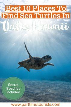 Here are the best places to see sea turtles in Oahu! Don't miss these incredible beaches and spots in Oahu to swim and snorkel with sea turtles Mexico Travel, Hawaii Travel, Oahu Hawaii, Hawaii Beach, Spain Travel, Destin Beach, Beach Trip, Island Park Idaho, Makua Beach