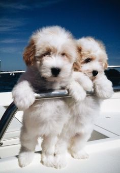 Dog And Puppies Drawings .Dog And Puppies Drawings Baby Animals Pictures, Cute Animal Pictures, Animals And Pets, Cute Puppy Photos, Wild Animals, Cute Dogs And Puppies, Baby Dogs, Doggies, Fluffy Puppies