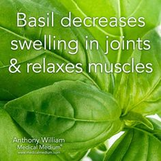 "Basil, Medicinal, Benefits, Uses, Recipes, Herbs, Health, Holistic, Plants, Natural, Alternative- Medicine, Container Gardening, DIY, ""Basil Decreases Swelling in Joints & Relaxes Muscles"""