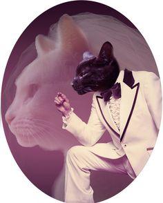cat wedding | Tumblr  EMILY, PUT THES ON YOUR WEDDING PROGRAMS.