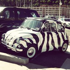 #Fiat500 its sooooo cute and zebra print ❤❤❤❤ Nice paint job! Did you know you we actually have a paint shop and courses specifically for paint repair and application!