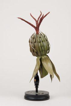 papier-m& model. Botanical Drawings, Botanical Illustration, Natural World, Natural History, Flower Model, Art Tribal, Drawing Exercises, Elements Of Nature, Victorian Flowers