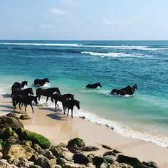 🔥 Wild horses enjoy the ocean - Tiere - Animais Cute Horses, Pretty Horses, Horse Love, Funny Animal Videos, Cute Funny Animals, Cute Baby Animals, Most Beautiful Horses, Animals Beautiful, Beautiful Sea Creatures