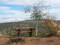 The bench by Osi Gilboa